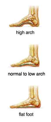 Human foot arches